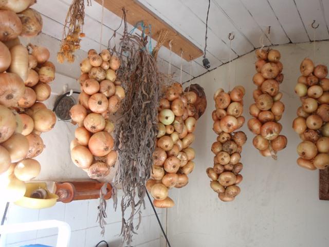 Onion Ropes