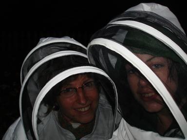 Bee_adventures