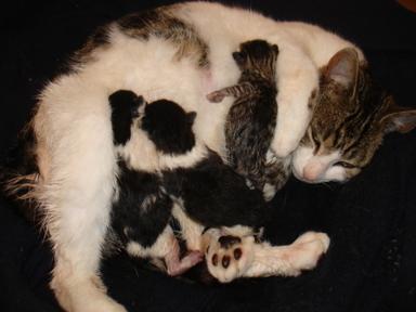 Newborn_kittens
