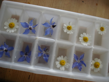 Herb_ice_cubes