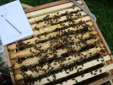 Hive_inspection