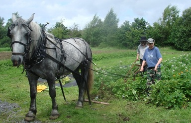 Working_horse_jim_cronin