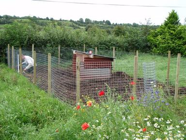 Pig_fence_training_enclosure