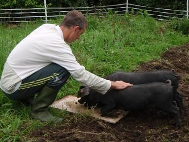 Pig_taming_low_res_2